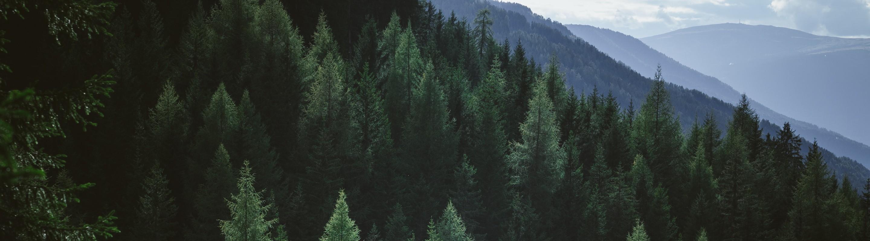 Wesbite Name: Sustainability